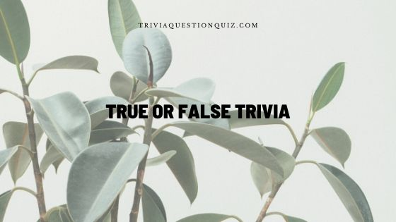 True or False Trivia