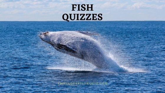 fish quizzes