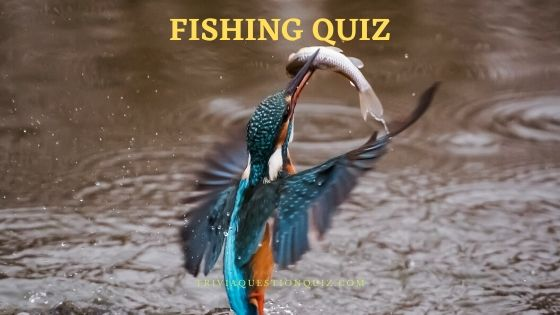 fishing quiz