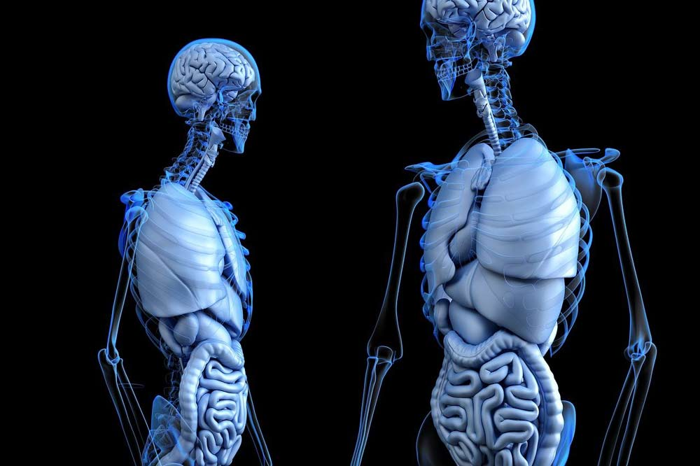 general knowledge in biology human body