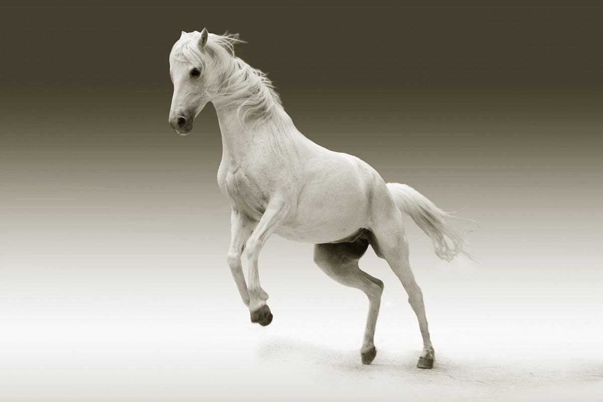 horse riding quiz